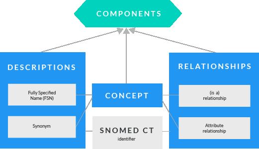 SNOMEd CT Komponenten